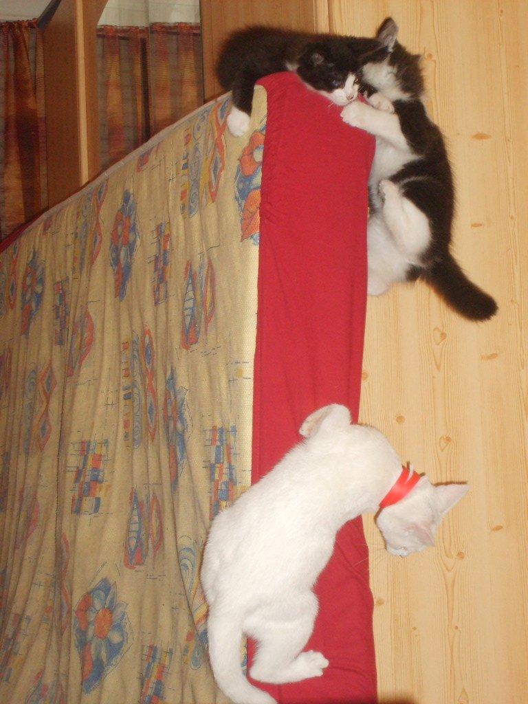 Maya essayant de monter